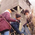 02/02/2020 Indre-et-Loire : les bénévoles de la Ligue de protection des oiseaux prennent soin des zones humides